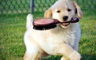 Описание пород собак, которые не пахнут псиной