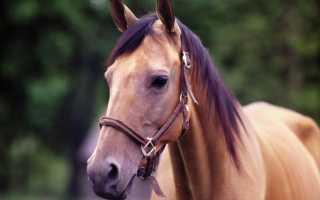 Катание на лошадях: преимущества, недостатки и основные рекомендации