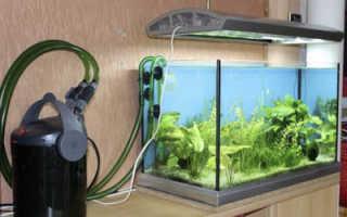 Можно ли выключать на ночь фильтр в аквариуме и по каким причинам?