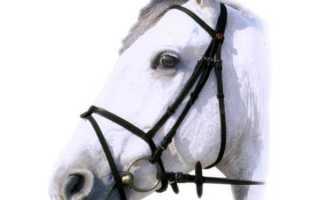Уздечки для лошади: виды и тонкости выбора