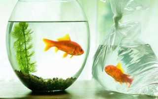 Какие рыбки и сколько времени могут жить без кислорода и фильтра?