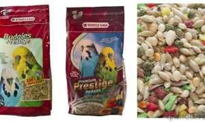 Корм для попугаев: виды и особенности подбора