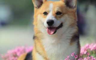 Лучшие клички для собак-девочек