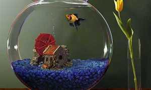 Аквариумы на 200 литров: размеры, сколько и каких рыб можно держать?