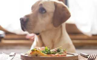 Рубец для собак: что это такое, как его готовить и сколько давать?