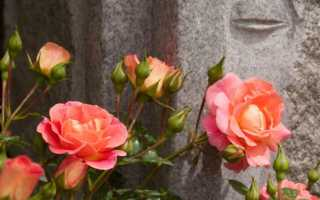 Розовые парки: описание с фото, модели