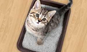 Бентонитовые наполнители для кошачьего туалета: плюсы, минусы и выбор