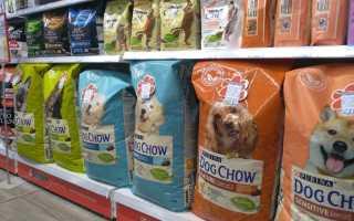 Корма холистики для собак мелких пород: виды и критерии выбора