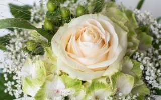 Букет невесты из белых роз: выбор и варианты оформления