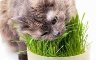 Все о кормах для улучшения шерсти кошек и котов