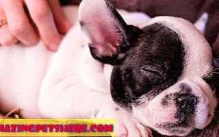 Сколько времени в сутки спят собаки и что на это влияет?