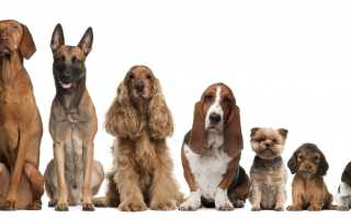 Выбираем клички для собак
