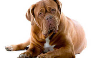 Корма для старых собак: какие бывают и как правильно подобрать?