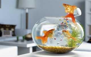 Куда ставить аквариум по фэншуй?