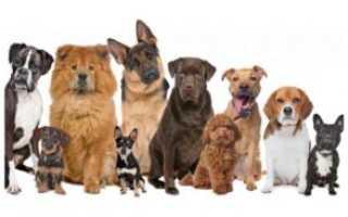 Крупные породы собак: общие черты, рейтинг, выбор и уход