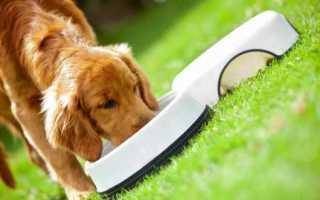 Сравнение сухих кормов для собак