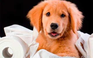 Как приучить собаку к туалету?