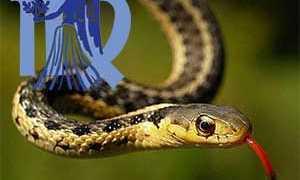 Женщина Дева, рожденная в год Змеи: характеристика и совместимость