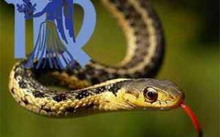 Мужчина Дева, рожденный в год Змеи: характеристика и совместимость