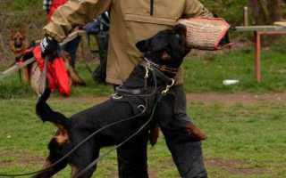 Как обучить собаку команде «Фас»?