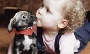 Сложные клички для собак из двух и более слов