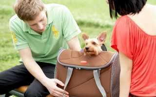 Переноска-рюкзак для собак: описание, критерии выбора и использование