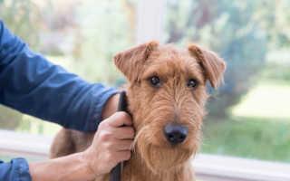 Триммингование собак: что это такое и как выполняется процедура?