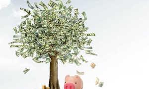 Как сделать денежное дерево из купюр?