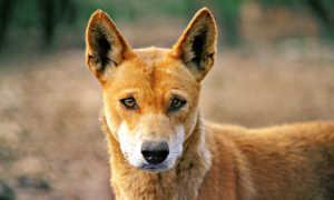 Возраст собак по человеческим меркам