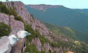Животные Крыма: виды и места обитания