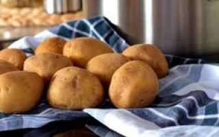 Можно ли давать картофель собакам и какие существуют ограничения?