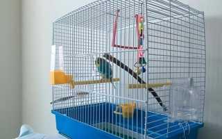 Клетки для попугая: требования, виды, правила выбора
