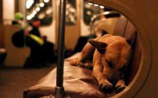 Интересные, забавные и малоизвестные факты о собаках
