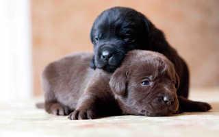 Новорожденные щенки: особенности развития, определение пола и нюансы ухода