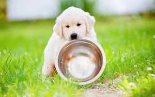 Чем и как кормить щенка в 2-3 месяца?
