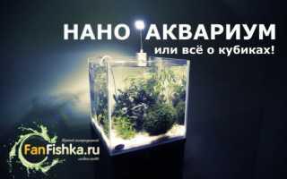 Рыбы и растения для наноаквариума