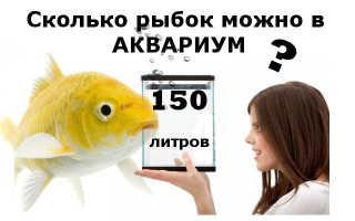 Аквариум 150 литров: размеры, освещение и подбор рыб